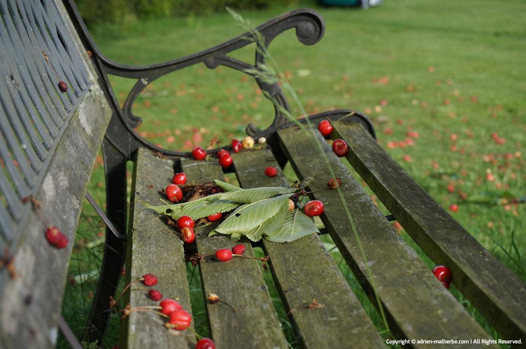 cherry bench