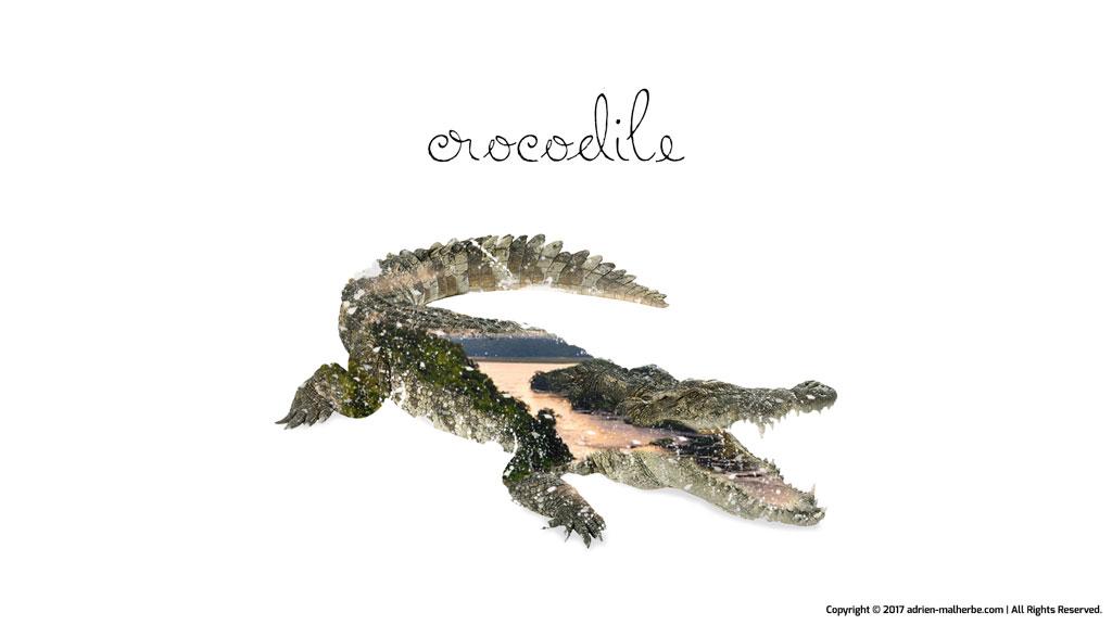 crocodile image editing