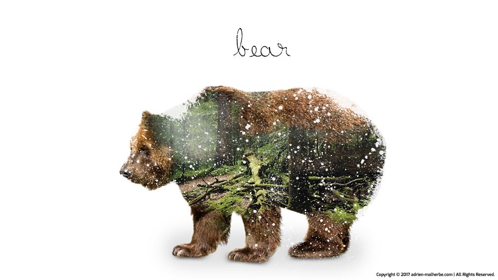 bear image editing